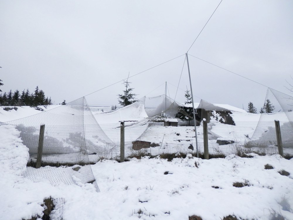 medium resolution of overhead netting covered by snow and torn