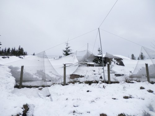 small resolution of overhead netting covered by snow and torn