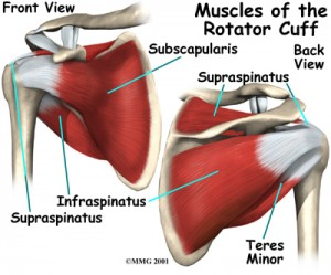 RC muscles