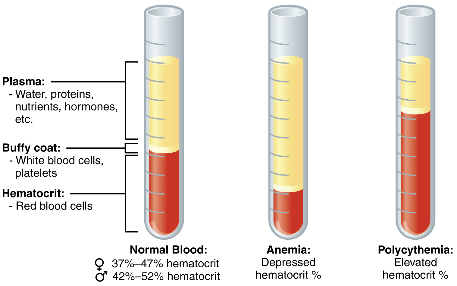 Blood Tests Amp Labysis How It Works And What You Need To Know