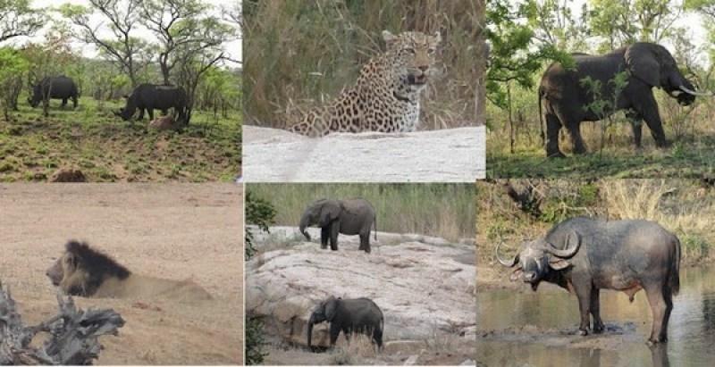 safari no kruger park africa do sul
