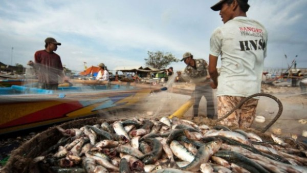 A study done for Swiss food retailer Nestlé found that migrant workers in the Thai seafood industry are often abused and paid so little they cannot refund fees to labour brokers. (Verité)