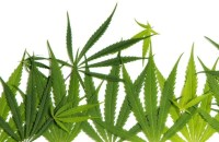 University of WA scientists found cannabis alters a person's DNA structure.