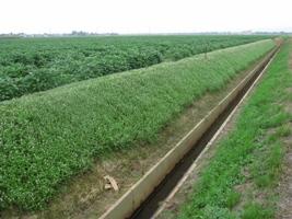 【長岡農林】 田んぼダムの取組活動を紹介します(その3) - 新潟県ホームページ