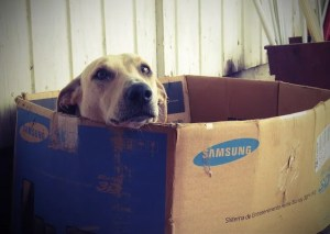 Dog in the cardboard box.
