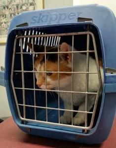 Pet carrier is the best way of transporting an animal