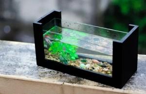 Very small aquarium