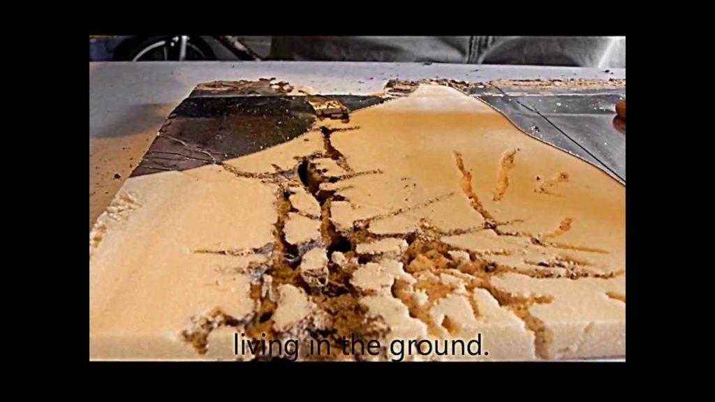 Spray Foam Insulation A Termites Dream  Savannahs