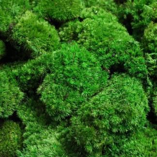 Pole Moss