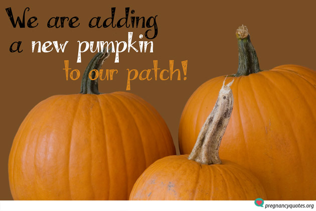 Adding a new pumpkin to patch quote