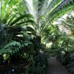 Botanischer_Garten_43