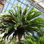 Botanischer_Garten_47