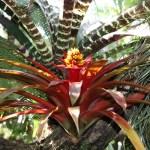 Botanischer_Garten_54