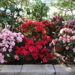 Botanischer_Garten_55