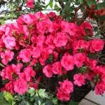 Botanischer_Garten_60
