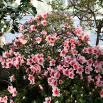 Botanischer_Garten_62