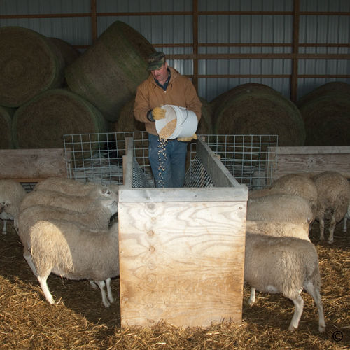 30 panel for goats  sheep  Build Your Own Feeders  Premier1Supplies