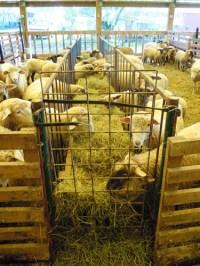Sheep Barn Layout | Car Interior Design