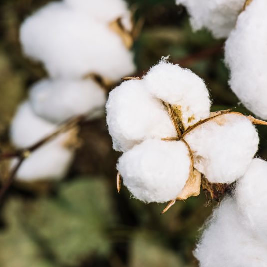 Responsibly Sourced Cotton
