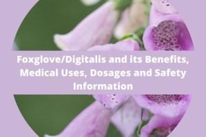 Foxglove/Digitalis