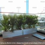 Case Study How Roof Terraces Are Transformed By Well Designed Planting