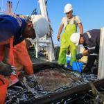 Produce realizó 61 cierres preventivos de zonas de pesca para favorecer conservación de la anchoveta