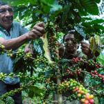 MINAGRI: Pequeños productores agropecuarios son prioridad en Reglamento de Certificación y Fiscalización de la Producción Orgánica