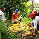 Hambre puede más que Covid-19 incentivar el secular olvido de agricultura