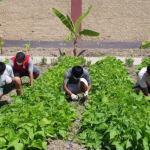 Residentes con discapacidad del INABIF cosechan alimentos de primera necesidad durante el aislamiento social obligatorio