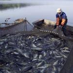 Preocupación por cifras de exportaciones post cuarentena
