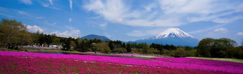 The best time to visit Japan with the weakening Yen