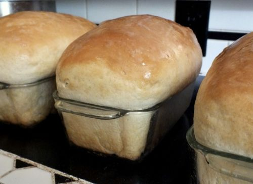 homestead-bread