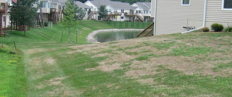 Turfgrass management: Recovering from snow mold damage