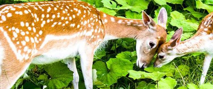 3 ways to attract deers