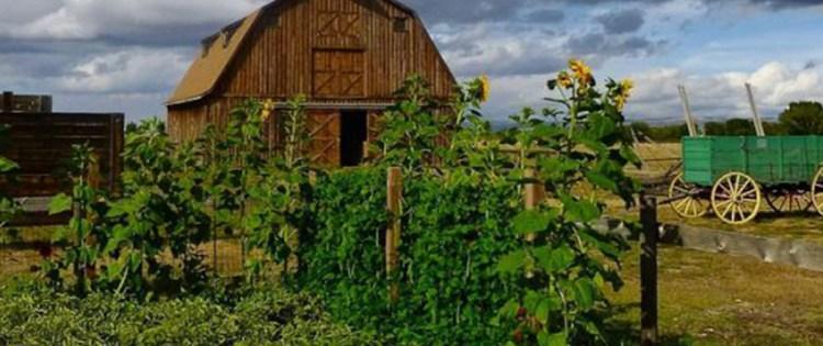 Good Survival Seeds: How to Stock A Survival Garden
