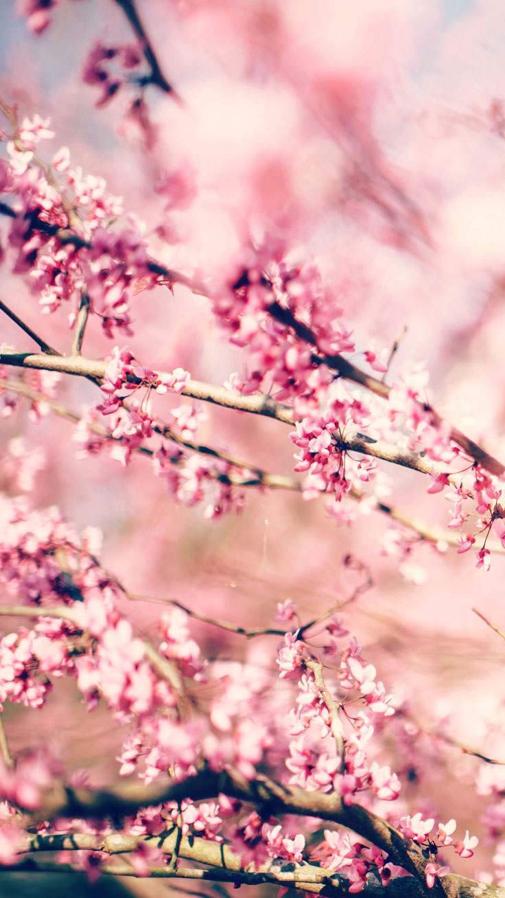 Cute Wallpaper Prints 27 Floral Iphone 7 Plus Wallpapers For A Sunny Spring
