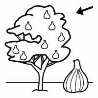 √ Fig Tree Coloring Pages
