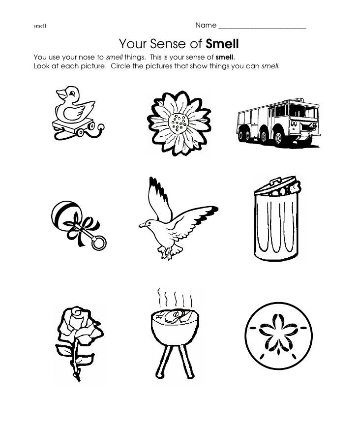 infant sensory lesson plan