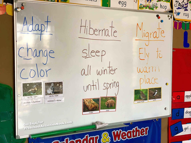 Animals In Winter Preschool Theme