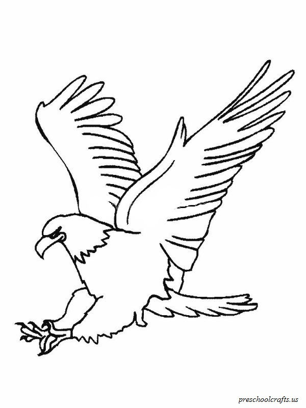 Download free printable Eagle colouring page for preschool