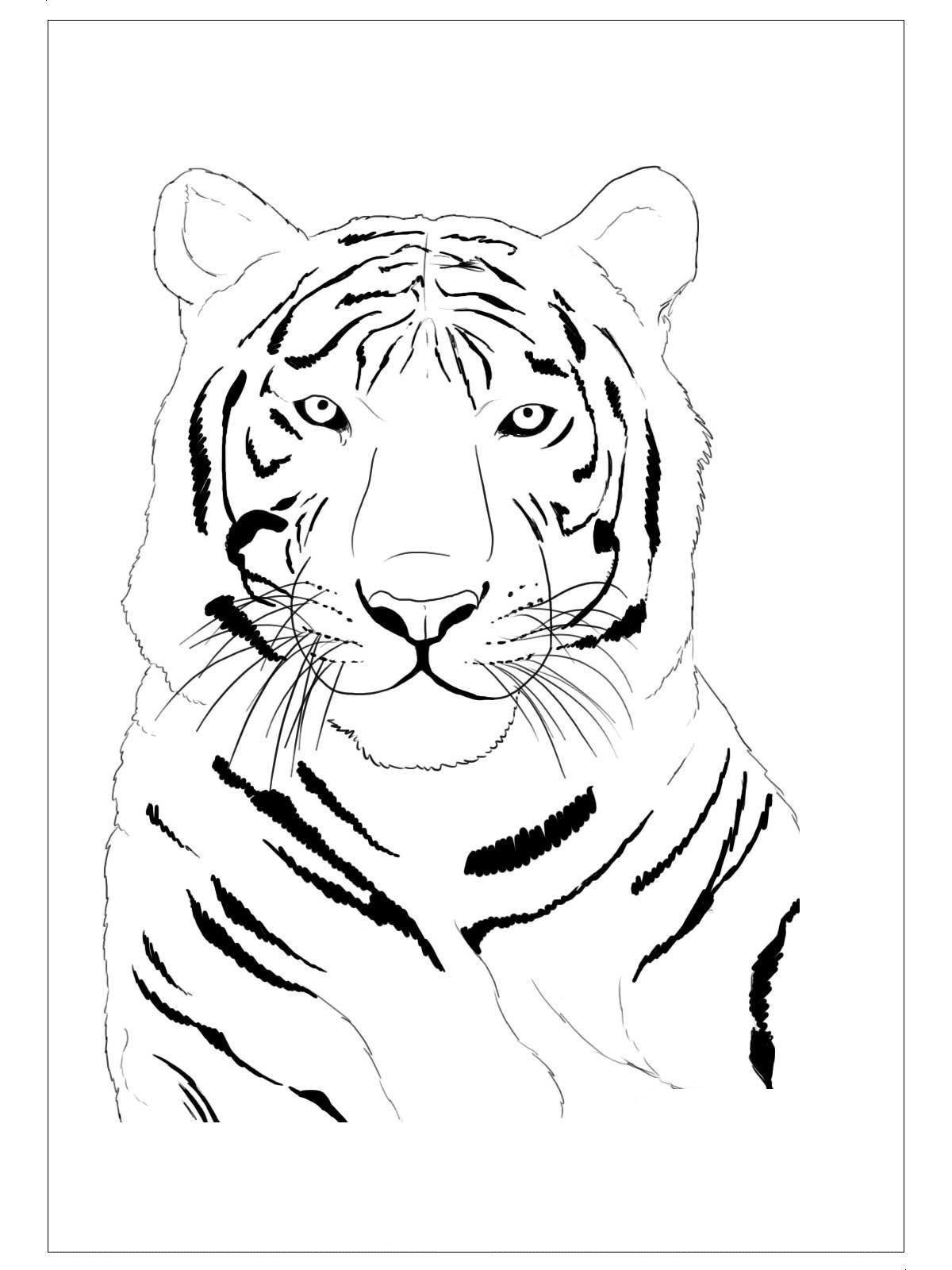 Tiger Coloring Page For Preschool