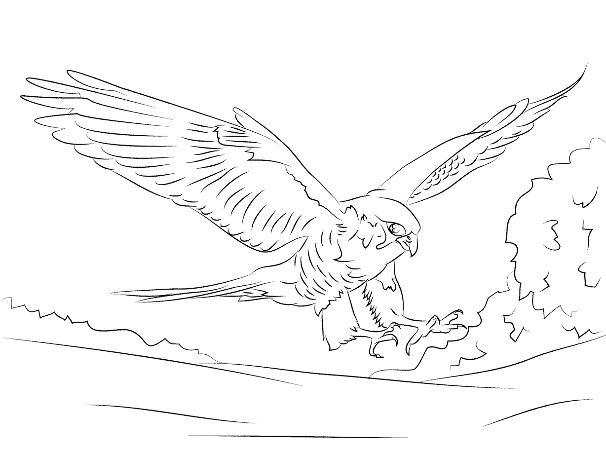 Free Animals Falcon Printable Coloring Pages For Adults