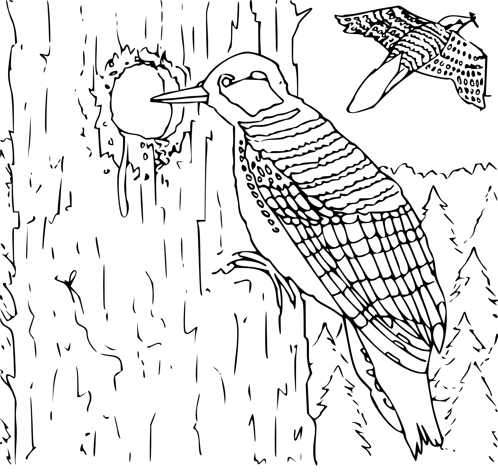 Woodpecker Coloring Pages