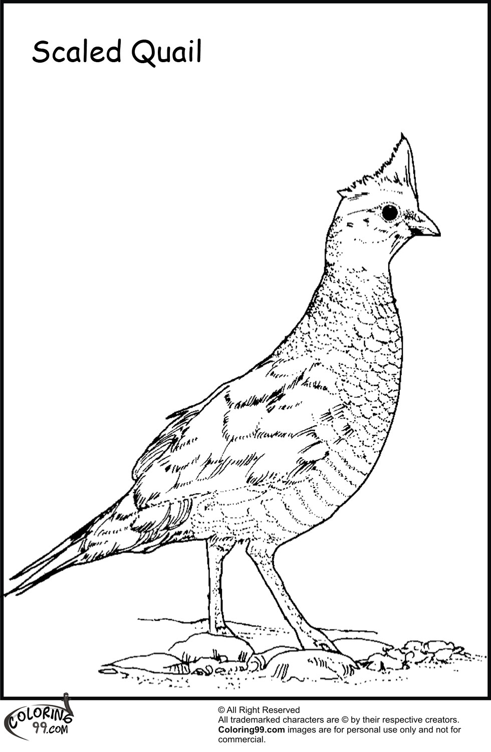 Manna And Quail Page Coloring Pages