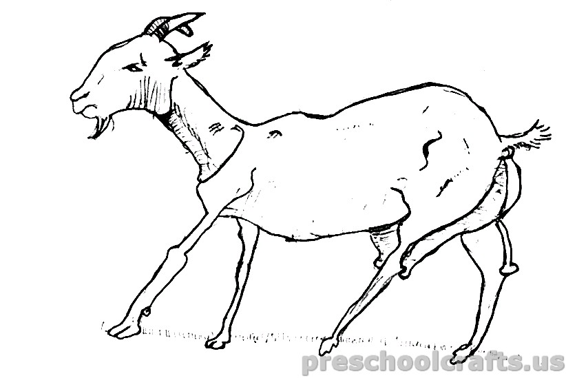 Goat Coloring Pages for Kids