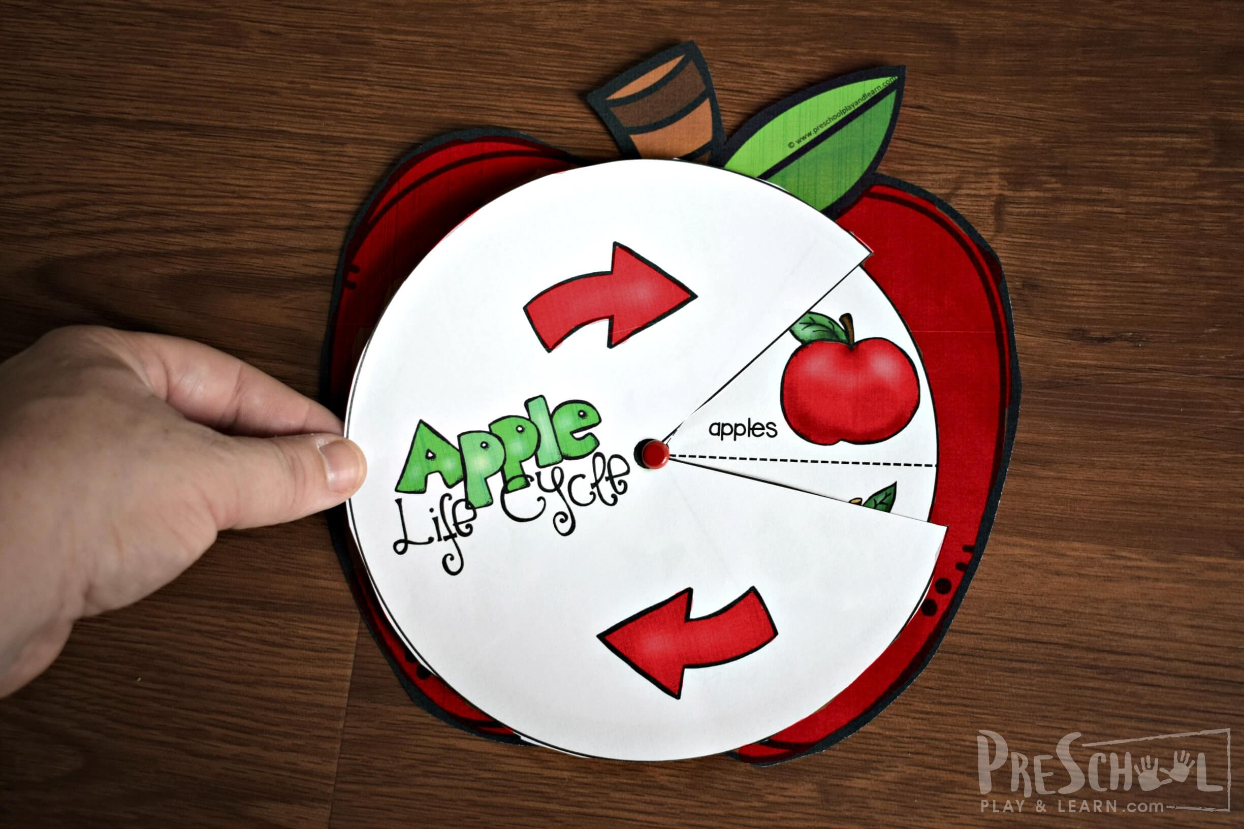 Apple Life Cycle Spinner