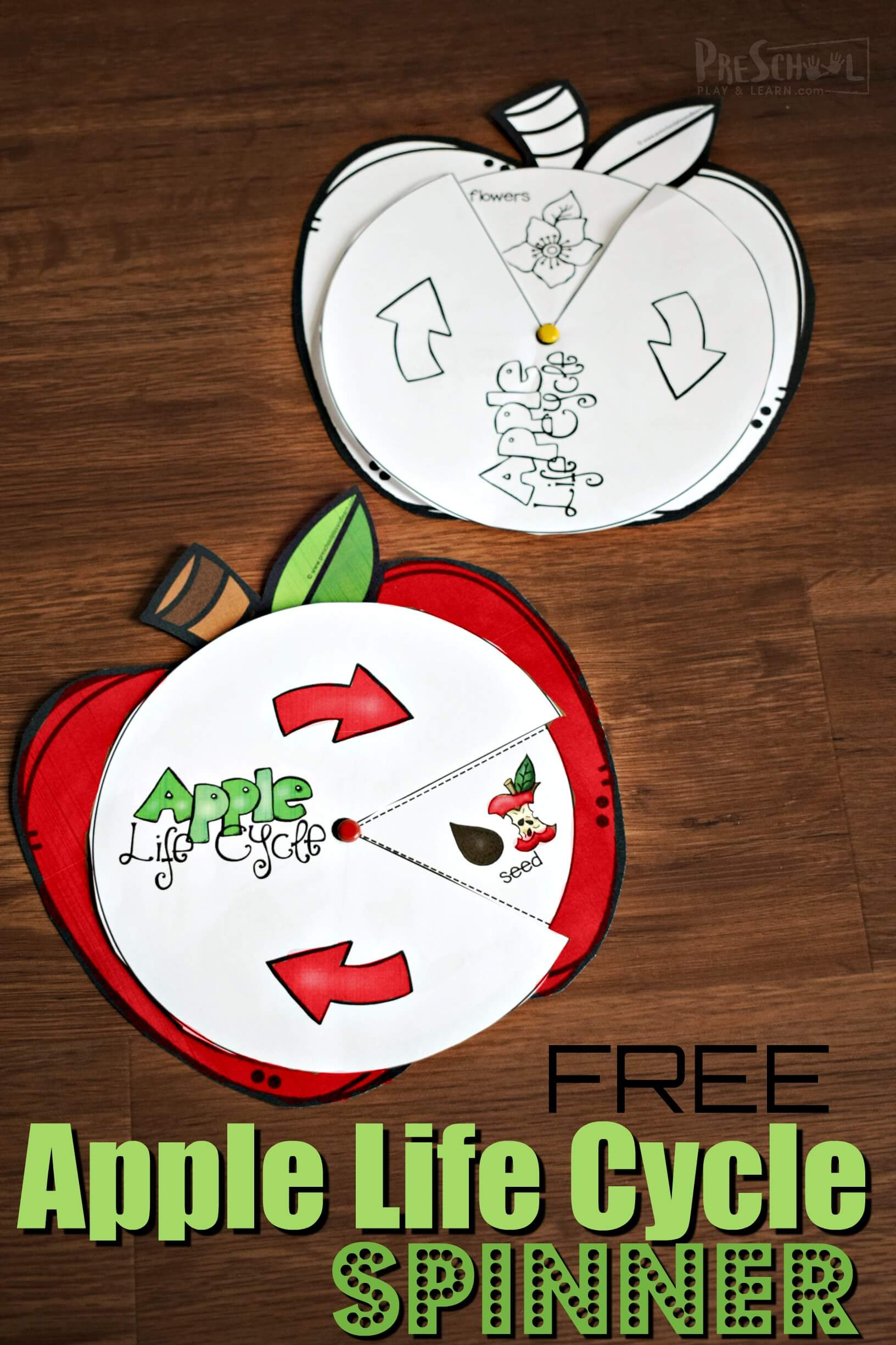 hight resolution of FREE Apple Life Cycle Spinner