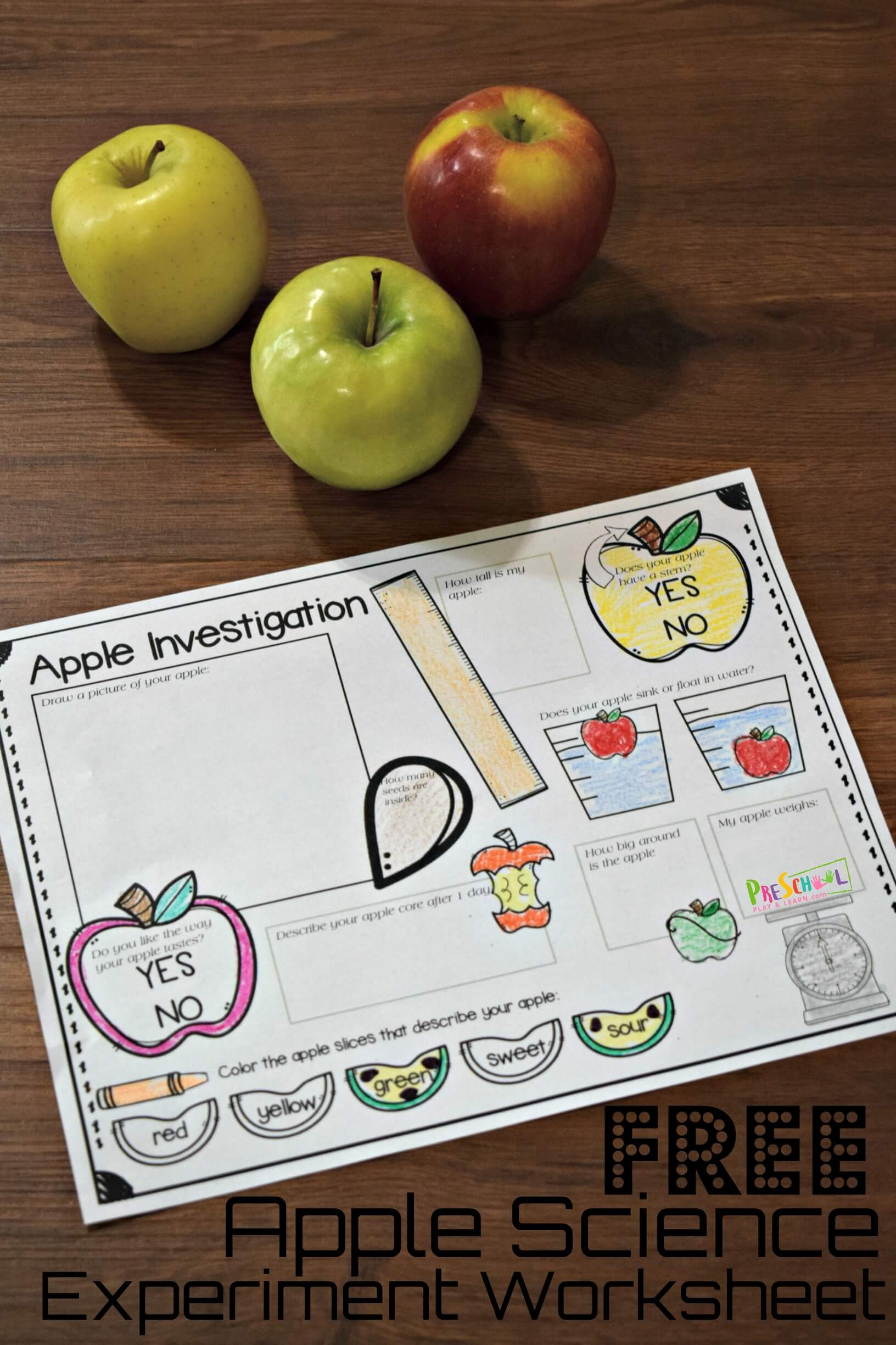 hight resolution of FREE Apple Science Experiment Worksheet