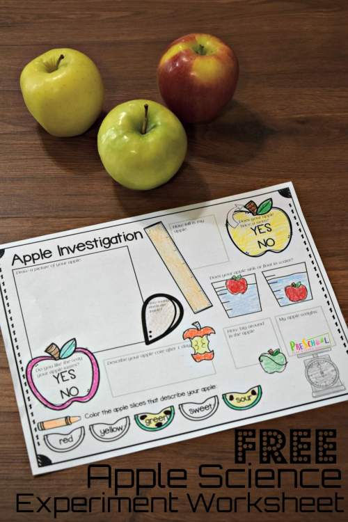 small resolution of FREE Apple Science Experiment Worksheet
