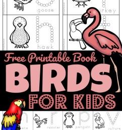 FREE Birds for Preschoolers Printable Book [ 2000 x 1375 Pixel ]